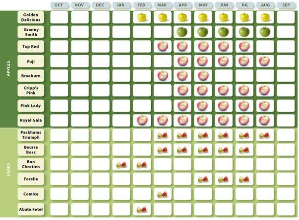 fruit_calendar_03